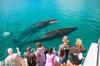 Humpback Whale Sunset Cruise