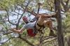 TreeUmph! Adventure Course - Tampa Bay Area: TreeUmph Adventure Course