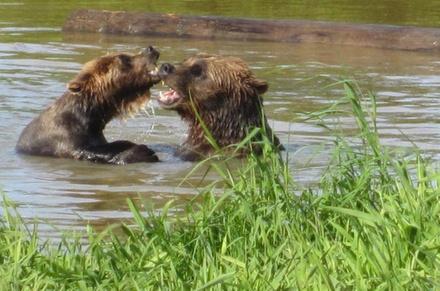 Wildlife and Turnagain Arm Tour