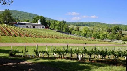 Monticello Wine Trail Tour 21 Off Virginia Beach Va