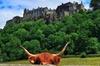 Private Edinburgh Shore Excursion Driving Tour to Stirling, Battle ...
