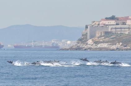 Excursión de avistamiento de delfines en Gibraltar con entrada opcional al teleférico Top of the Rock Oferta en Groupon
