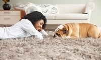 woman and dog on clean shag carpet