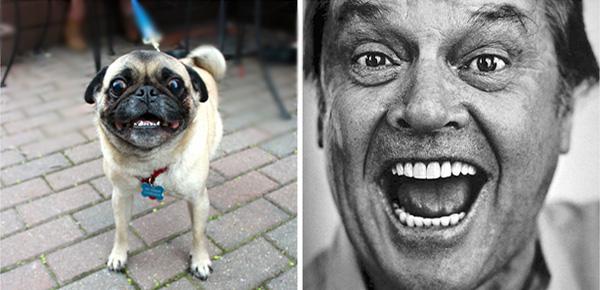 the-seven-most-dog-friendly-restaurants-in-chicago_jacknjack_600c290