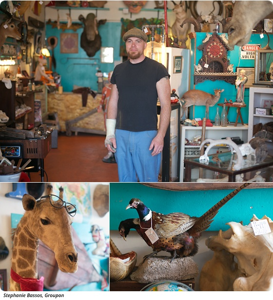 Curiosity Shop: Vintage Taxidermy and Antique Oddities at Andersonville's Woolly Mammoth
