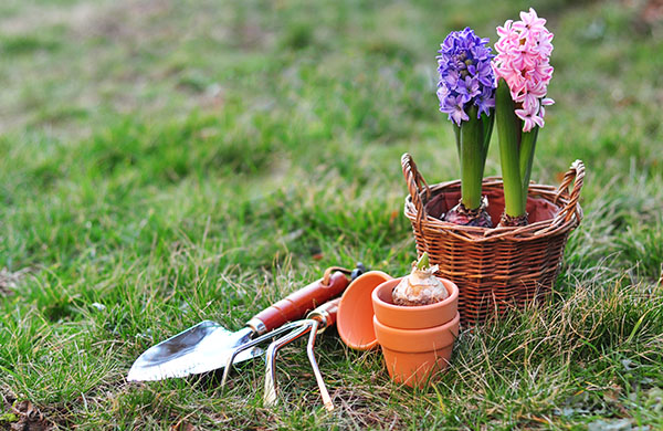 Get the gardening tools you need to grow like a pro for Gardening tools you need