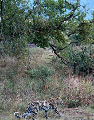 south africa safari 5