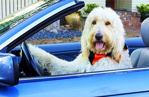 viaggi cane