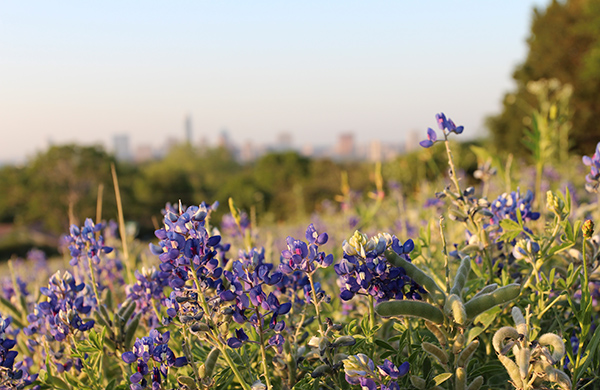 Best Bluebonnet Photo Ops