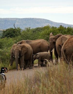 south africa safari 4