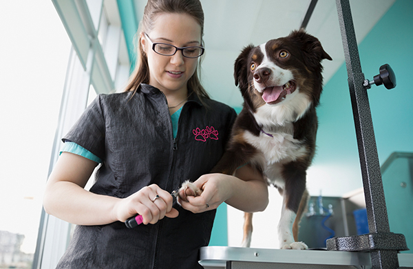 A dog grooming guide for keeping your pup happy healthy that really depends on the type of dog you have and their particular needs some dogs might not have the type of fur that needs to be cut whereas other solutioingenieria Gallery
