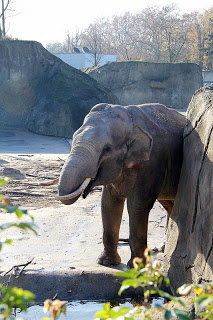 Elefantenbaby im Kölner Zoo