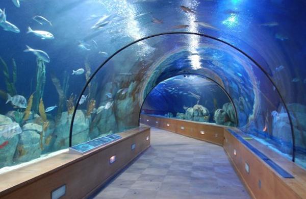 Imagini pentru acuario de sevilla