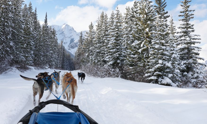 Team of sled dogs pulling a sled into the mountains
