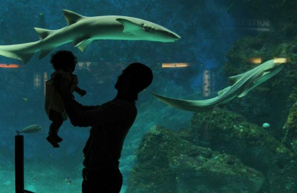 Sortie et dépaysement à  l'aquarium du Grand Lyon