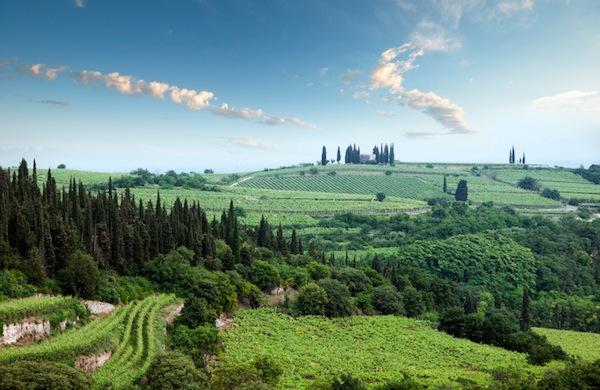 Le Strade del Vino intorno a Firenze