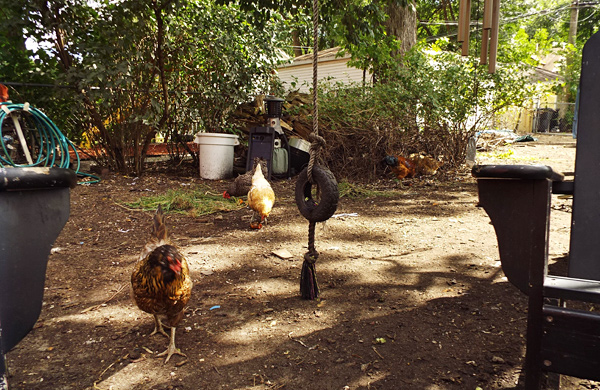 Three of the Coolest Chicken Coops in Chicago