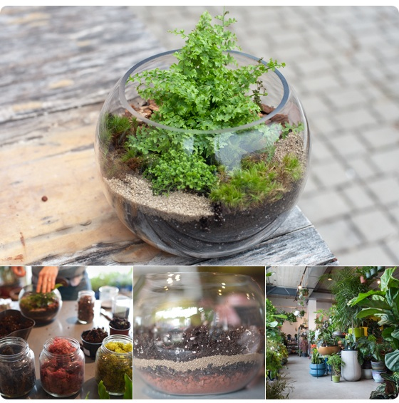 Tabletop Gardens A Terrarium How To With Tara Heibel Of Sprout Home