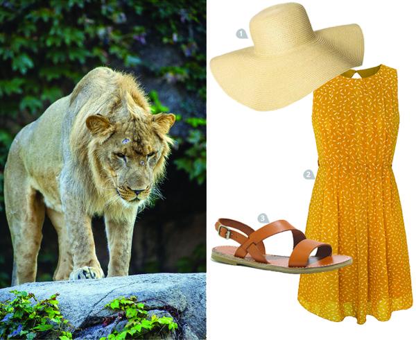 dress-to-impress-a-warthog_lion_600c490