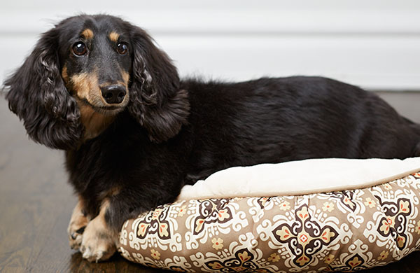 The Best Dog Beds For Your Pup In 5 Easy Steps
