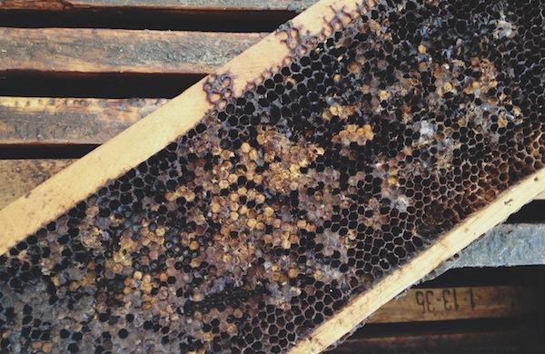 Beekeeping-Tips-from-Krista- Conner-honeycomb_600c390