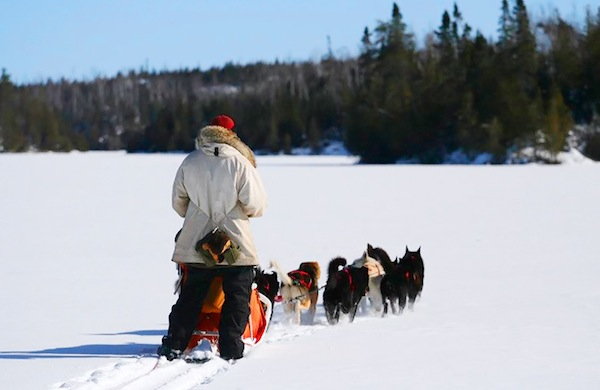 A Day in the Life of a Dog-Sledder