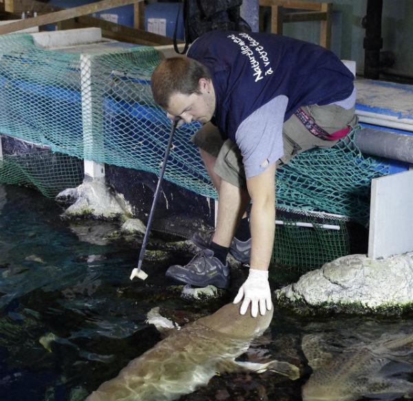 Fosse aux requins Aquarium de Lyon