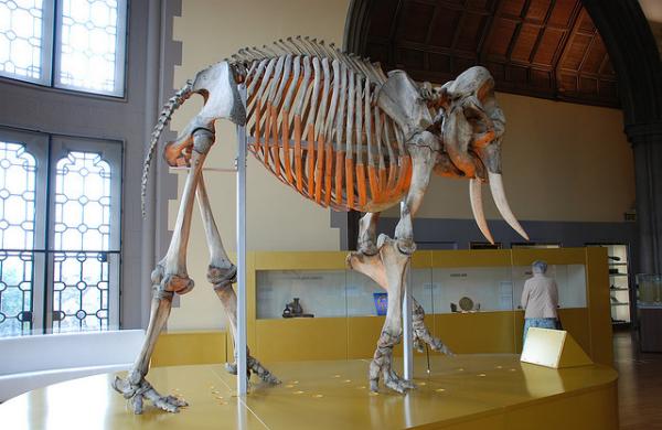 Display at the Hunterian Museum