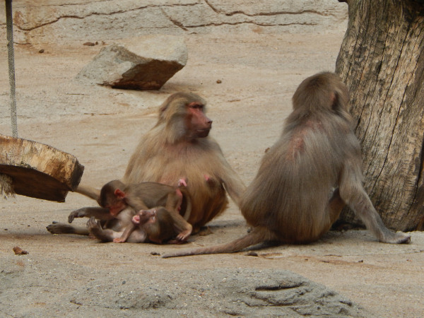 Hagenbeck Tierpark Affen