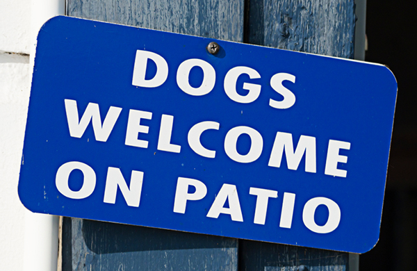 Dog Friendly Restaurants and Gathering Spots