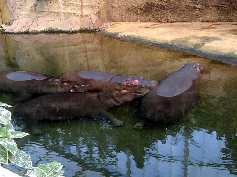 Ein Besuch im Zoo…