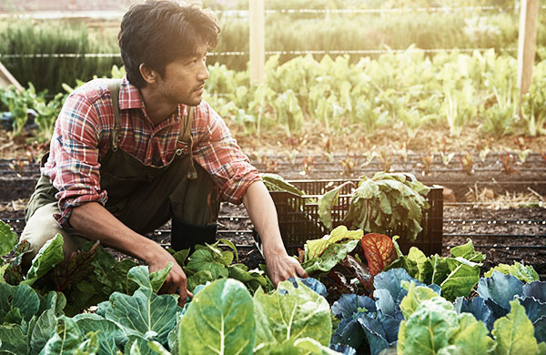 How To Plan And Plant A Vegetable Garden