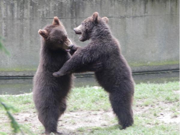 Tierpark Hagenbeck — Von Alpaka bis Zwergzebu