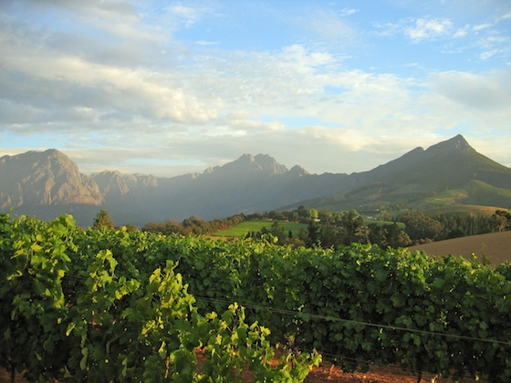 What Wines You'll Be Drinking: The Impending Rise of South African Wine