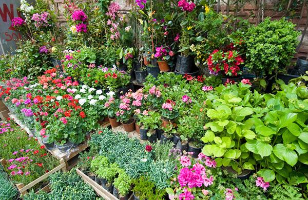Emerald Cityu0027s Coolest Garden Stores