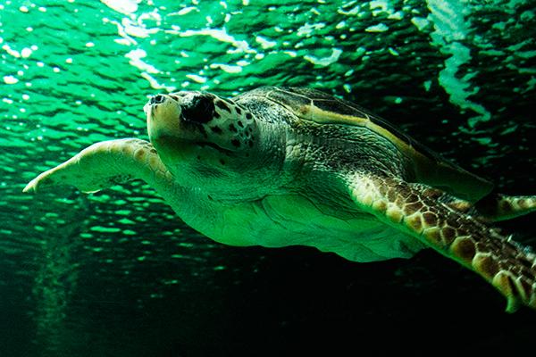 Tortuga marina en el Zoo de Madrid