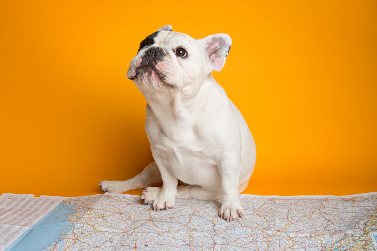 Pet-Friendly Travel Tips from Manny the Frenchie