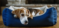 Pet Beds Buying Guide