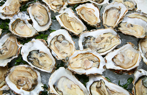 Rockin' Raw Bars: Where to Get Seattle's Freshest Oysters