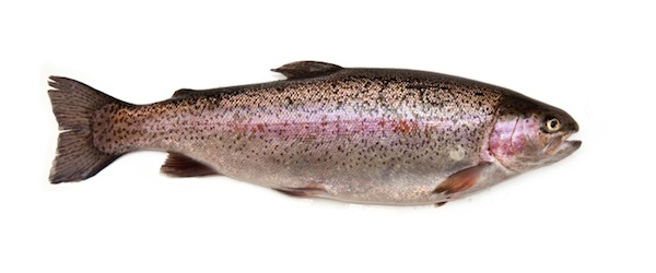 Experts-Show-Us-How-to-Snag-the-Most-Common-Freshwater-Fish-trout_600c250