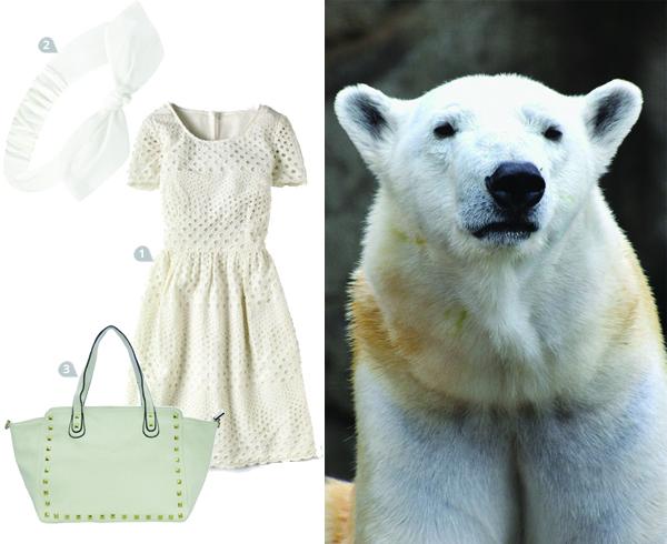 dress-to-impress-a-warthog_polar_600c490