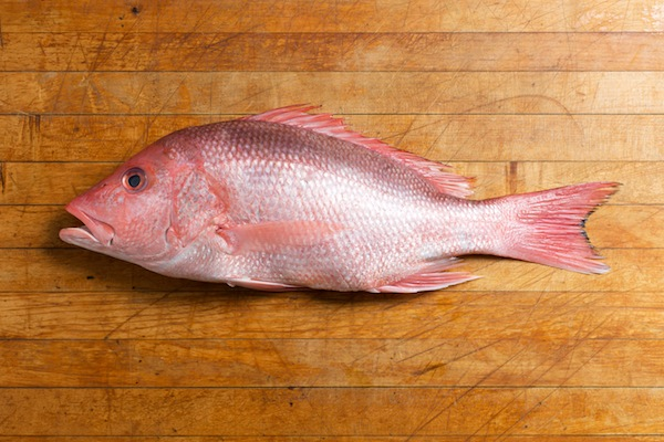 Different types of fish you can eat for Best type of fish to eat