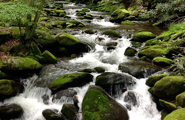 Three Things You Shouldn't Miss in Great Smoky Mountains National Park
