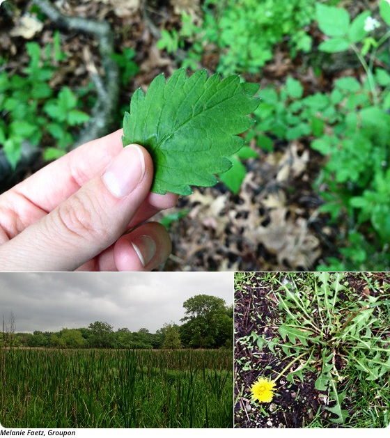 Foraging 101: If It Looks Like Food and Smells Like Food, Get a Third Opinion