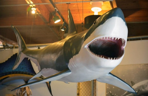 Things-to-Do-in-LA-Saturday-August-9-to-Friday-August-15-shark_600c390