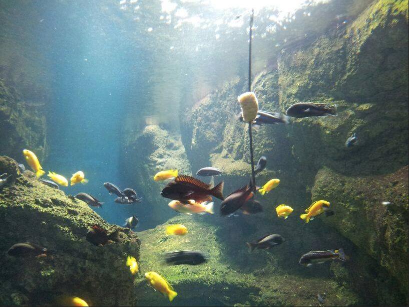 El acuario de Zaragoza en la Ciudad de Zaragoza