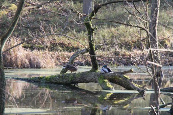 Tiere beobachten am Naturlehrpfad Briesetal