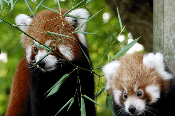 Découvrez le Zoo de Pessac pour une journée inoubliable !