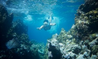 best snorkeling in the caribbean places