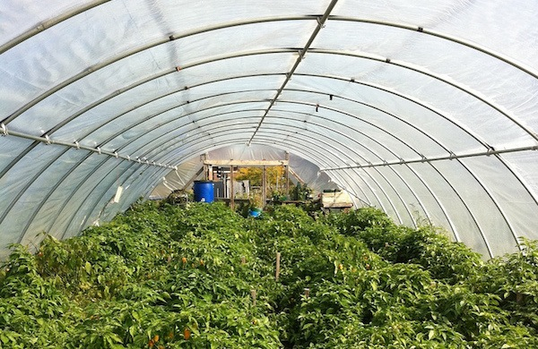 From Pavement to Plowed Earth: Urban Farms in Detroit